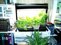 indoor kitchen gardens indoor kitchen garden kitchen window herb garden kitchen window herb garden window herb