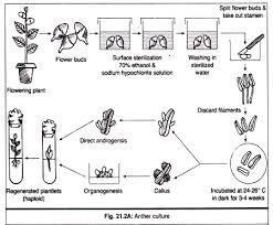Tissue Culture Flow Chart Notes On Anther Culture Biotechnology