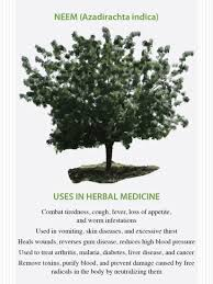 the medicinal properties of neem natural health mother earth news the medicinal properties of neem