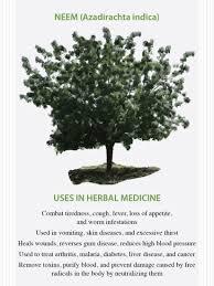 the medicinal properties of neem natural health mother earth news the medicinal properties of neem