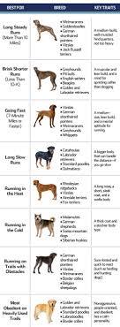 511 best dog breeds all images on dogs dog 511 best dog breeds all images on dogs dog and beautiful dogs