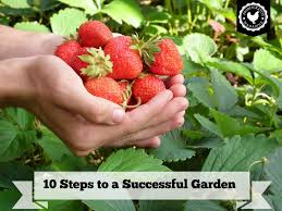 Small Picture Garden Design Garden Design with Tips for a Successful Vegetable