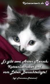 Katzen Bilder Mit Sprüchen Die Besten 25 Altdeutscher Schäferhund