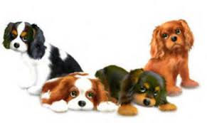 Image result for cavalier king charles spaniel cartoon