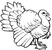 Small Picture Turkey coloring pages Free Coloring Pages