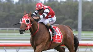 Image result for right of wrong horse