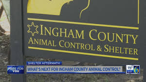 Image of: Cats I929 Fm Shelter Aftermath Whats Next For Ingham County Animal Control
