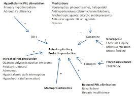 Prolactin Level Chart Stress Blog Sarah Kennard