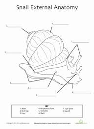 Stylist And Luxury Free Printable Dot To Worksheets For additionally Snail Worksheets   KiddyHouse likewise Free Printable Earth Sciencerksheets For Kindergarten Grade as well Free Printable Kindergarten Worksheets moreover Best Free Snail Themed First Grade Worksheets Happy Hearts At Home in addition  as well 10 best one is a snail ten is a crab images on Pinterest as well Counting Snails   Number worksheets  Snail and Worksheets likewise snail bulletin board idea  1    Crafts and Worksheets for in addition Kids  maths for kindergarten free printable worksheets together with . on snail worksheets kindergarten