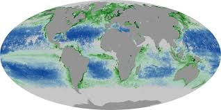 Chlorophyll Sea Surface Temperature