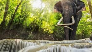 s elephants waterfall