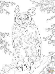 Small Picture Barn Owl Coloring Pages Realistic Coloring Coloring Pages