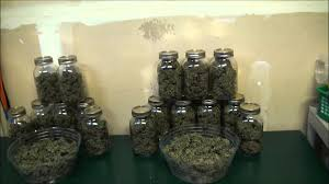 aerogarden weed harvest. growing weed in my closet \u2013 final harvest and smoke reports aerogarden w