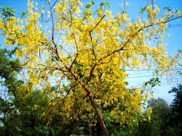 flower bearing trees a photo from