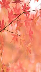 ~Coral Autumn by alissa