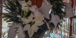 Zeit Der Weihnachtssterne Alt Werden Kann Ich Später