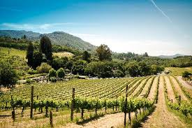napa and sonoma wine country full day tour from san francisco provided by gray line san francisco san francisco california tripadvisor