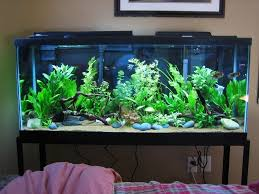 This is an amazing aquarium! I want the n my bedroom so I can put all my  fish in! And so my platy fry can grow bigger!