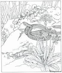 Schildpad Tekening Mooi Natuur Kleurplaat A Kleurplaten Kleurplaat