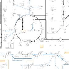 Metabolic Pathways Chart Biochemical Pathways