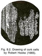 essay on cell drawing of cork cells by robert hooke