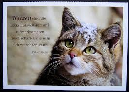 Katzen Kätzchen Pinterest Zitate Katze Katzen Zitate