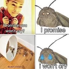 I Wont Cry Moth Lamp Know Your Meme