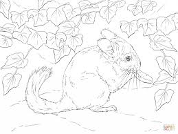 Small Picture Long Tailed Chinchilla Download For Coloring Page Animal