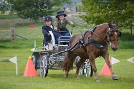 Carriage Driving - Carriage driving competition, Thoresby Park