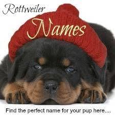 Rottweiler Puppy Growth Chart Average Puppy Weights I