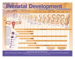 Viable Fetus Chart Abortion New Challenges Page 25 Realgm