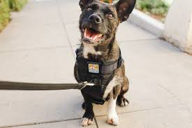 Voyager Harness Size Chart The Best Dog Harness Reviews By Wirecutter