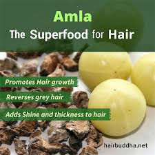 Image result for seed coat and seed of amla