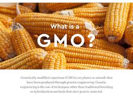gmos are a hot topic of debate in the food policy and sustaility world with many arguments for and against their use the consensus it s plicated