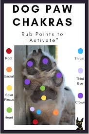 Dog Chakras The Complete Guide To Doggy Spiritual Healing