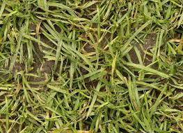 Dirt grass texture seamless Sand 13seamless Wet Grass Texture Seamlesswetgrasstexture Youtube 25 Stunning Grass Textures Backgrounds Utemplates
