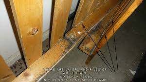 Small Brown Bugs In Bedroom Bed Bugs Bedbugs Faqs Pest Control Extermination And