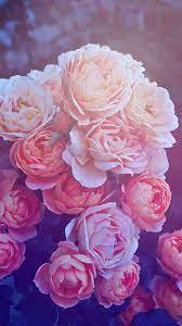 Wallpaper iphone roses ...