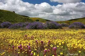 spectacular display of wildflowers