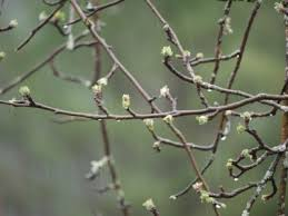Spraying Of Dormant Oils U2013 How And When To Use Dormant Oil On Dormant Fruit Trees