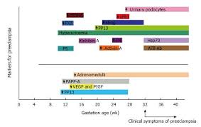 Preeclampsia Protein Levels Chart Preeclampsia From A Renal Point Of View Insides Into