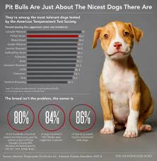 Types Of Pitbulls Chart Pit Bulls Are Just About The Nicest Dogs There Are Life