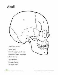 Small Picture 8 best The human body images on Pinterest Human anatomy Anatomy