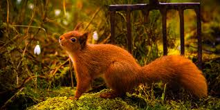 squirrels are one of the common presences as a part of landscape that involves trees hence your garden is not an exemption