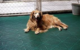 5 best dog kennel floorings reviewed make sure your pet is safe and comfortable