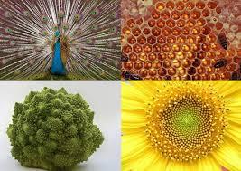 Resultado de imagen de La simetría en la vida cotidiana