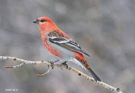 Bird Photography Naturally by David Lilly - The Canadian Nature Photographer