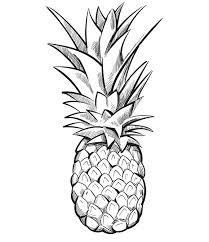 pineapple drawing. pineapple drawing y