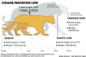 Mountain Lions And How To Avoid Their Rare Attacks On Humans