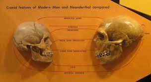 Perfiles craneales de Homo sapiens y Neandertal